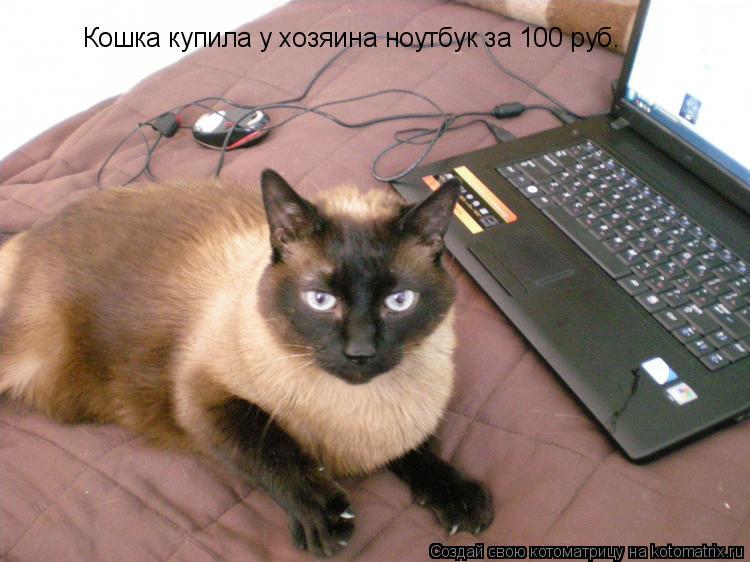 Котоматрица: Кошка купила у хозяина ноутбук за 100 руб.