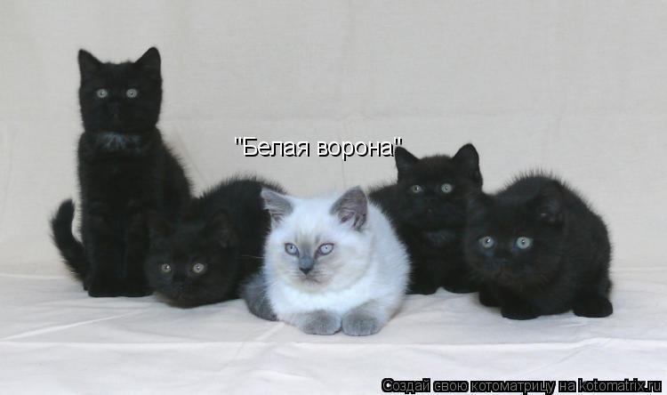 "Котоматрица: ""Белая ворона"""