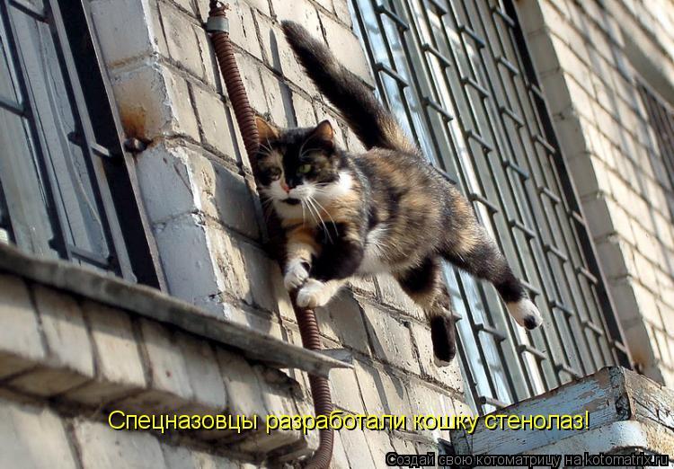 Котоматрица: Спецназовцы разработали кошку стенолаз!