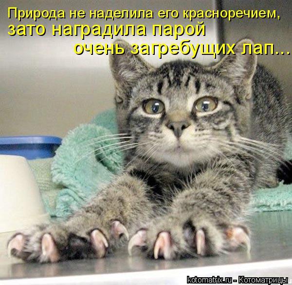 Котоматрица: Природа не наделила его красноречием, зато наградила парой  очень загребущих лап...