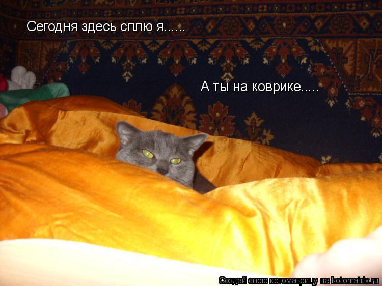 Котоматрица: Сегодня здесь сплю я...... А ты на коврике.....