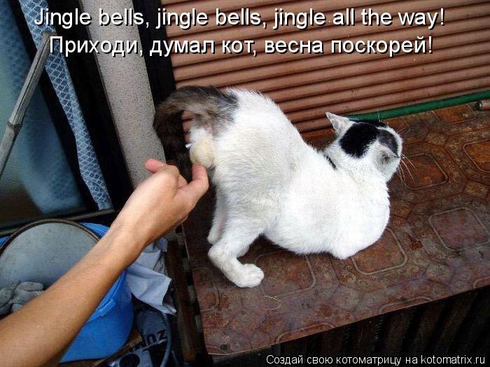 Котоматрица: Jingle bells, jingle bells, jingle all the way!  Приходи, думал кот, весна поскорей!