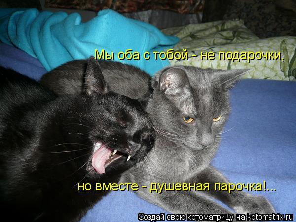 Котоматрица: Мы оба с тобой - не подарочки, но вместе - душевная парочка!...