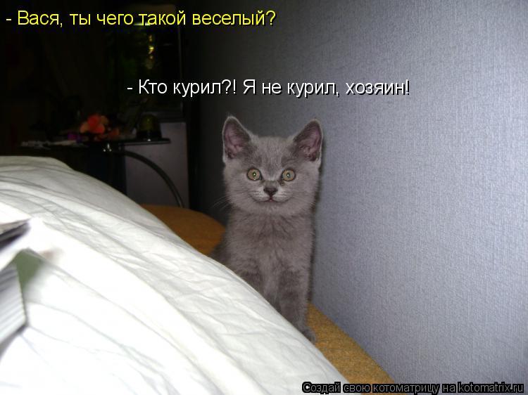 Котоматрица: - Кто курил?! Я не курил, хозяин! - Вася, ты чего такой веселый?