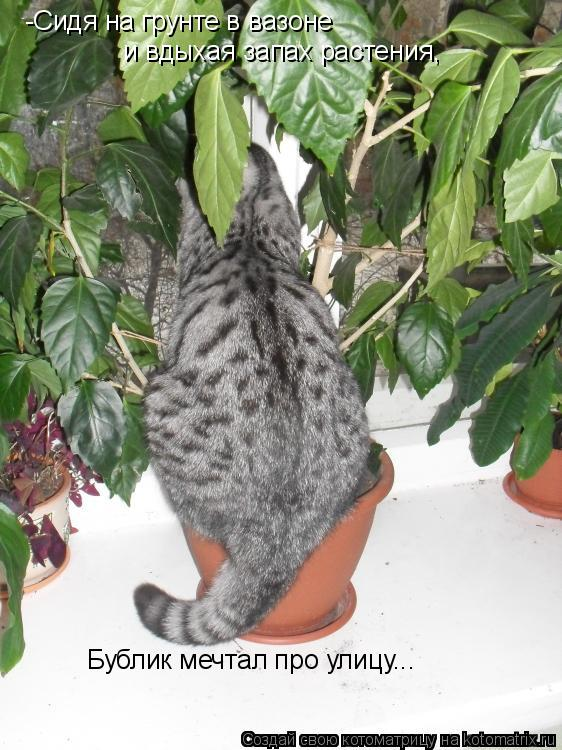 Котоматрица: -Сидя на грунте в вазоне   и вдыхая запах растения,   Бублик мечтал про улицу...