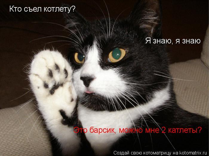 Котоматрица: Кто съел котлету? Это барсик, можно мне 2 катлеты? Я знаю, я знаю