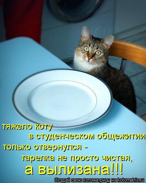 Котоматрица: тяжело коту в студенческом общежитии только отвернулся - тарелка не просто чистая, а вылизана!!!
