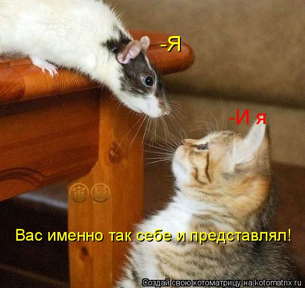 Котоматрица: -Я -И я Вас именно так себе и представлял!