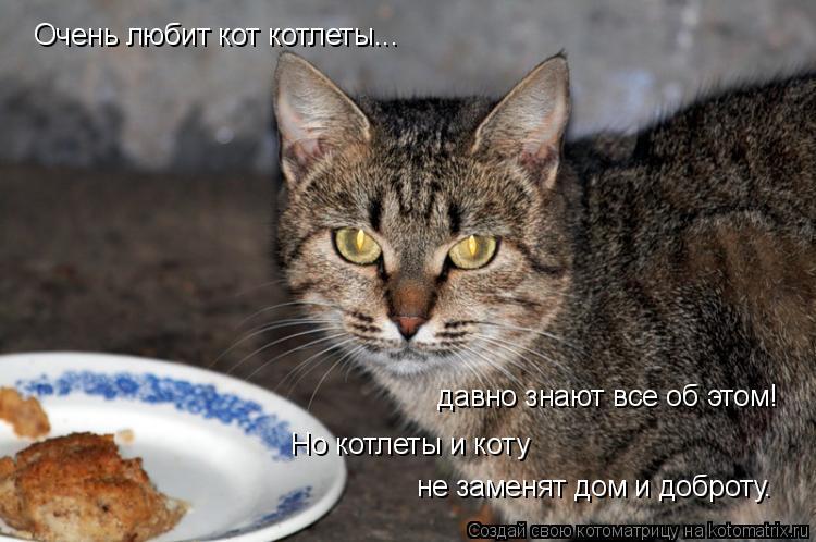 Котоматрица: Очень любит кот котлеты... давно знают все об этом! Но котлеты и коту не заменят дом и доброту.