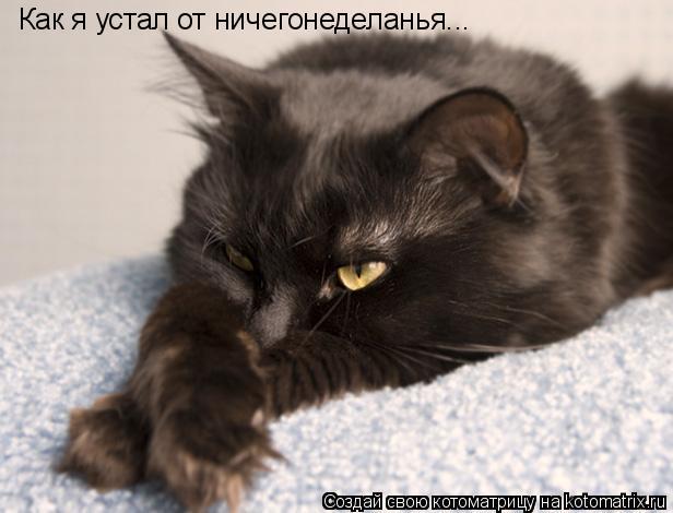 Котоматрица: Как я устал от ничегонеделанья...