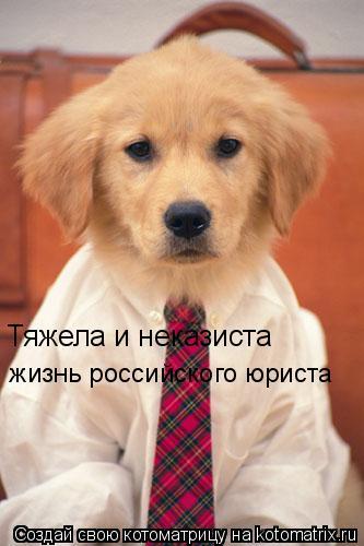 Котоматрица: Тяжела и неказиста жизнь российского юриста