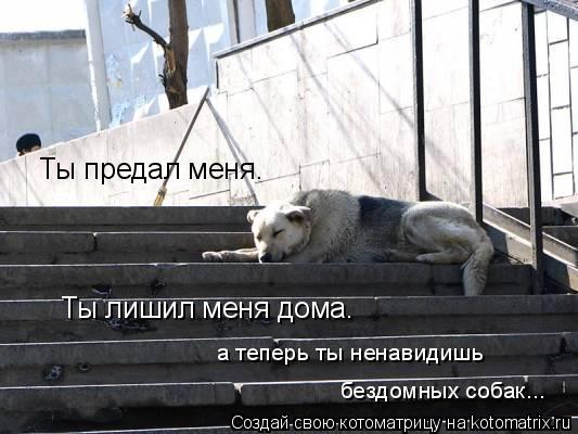 Котоматрица: Ты предал меня. Ты лишил меня дома. а теперь ты ненавидишь  бездомных собак...