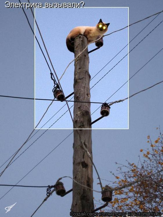 Котоматрица: Электрика вызывали?