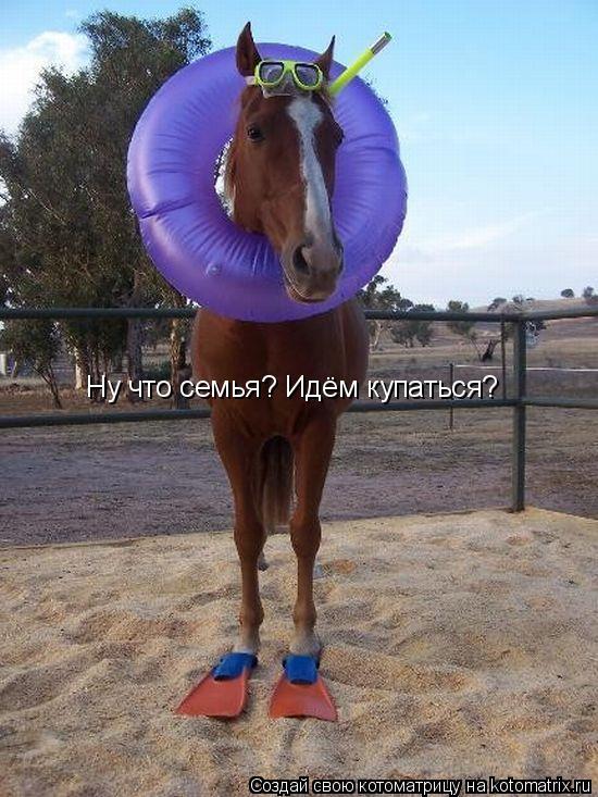 Котоматрица: Ну что семья? Идём купаться?