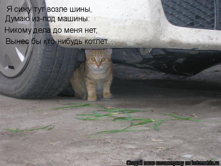 Котоматрица: Я сижу тут возле шины, Думаю из-под машины: Никому дела до меня нет, Вынес бы кто-нибудь котлет...