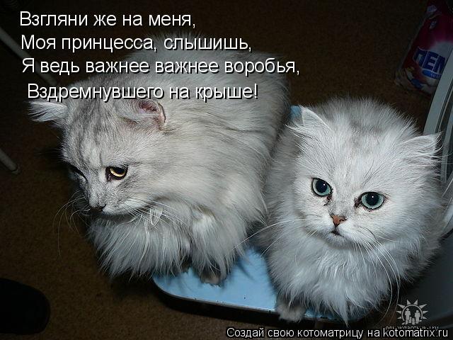 Котоматрица: Взгляни же на меня, Моя принцесса, слышишь, Я ведь важнее важнее воробья, Вздремнувшего на крыше!
