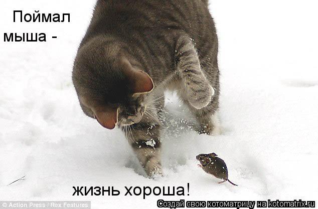 Котоматрица: Поймал  мыша -  жизнь хороша!