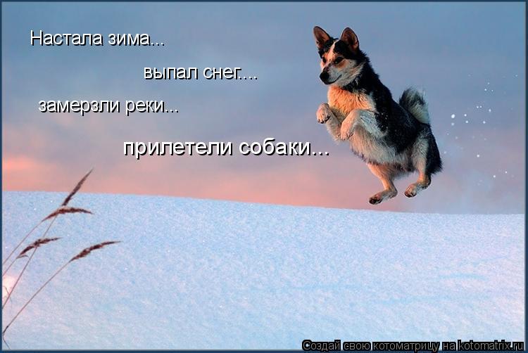 Котоматрица: Настала зима... выпал снег.... замерзли реки... прилетели собаки...
