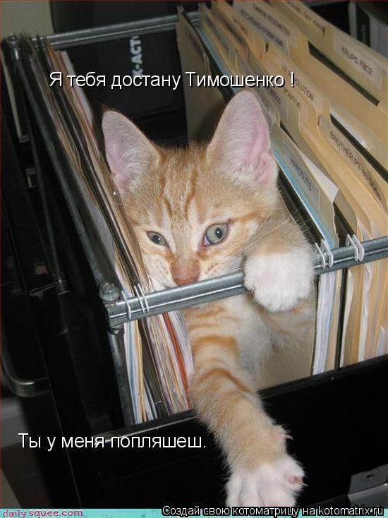 Котоматрица: Я тебя достану Тимошенко ! Ты у меня попляшеш.