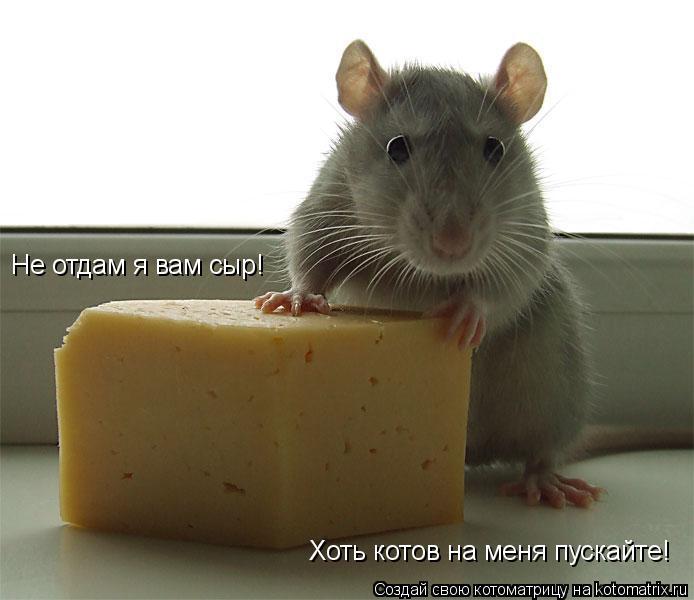 Котоматрица: Не отдам я вам сыр! Хоть котов на меня пускайте!