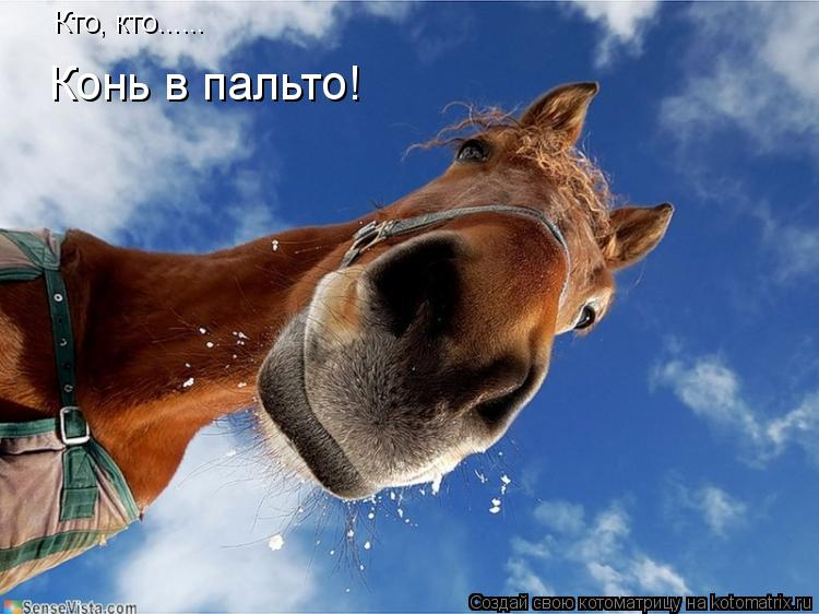 Котоматрица: Кто, кто...... Конь в пальто!