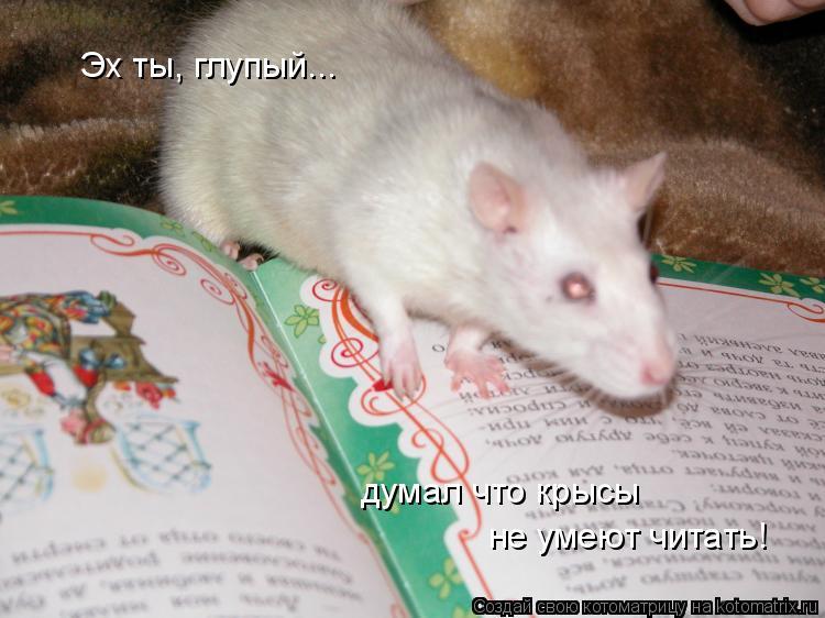 Котоматрица: Эх ты, глупый... думал что крысы не умеют читать!