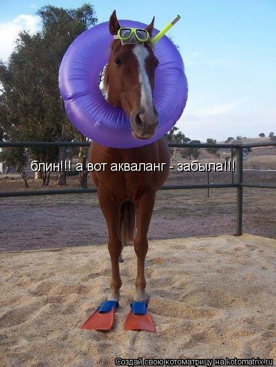 Котоматрица: блин!!! а вот акваланг - забыла!!!