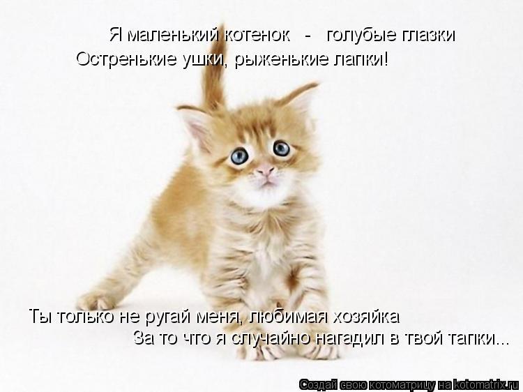 Котоматрица: Я маленький котенок   -   голубые глазки Остренькие ушки, рыженькие лапки! Ты только не ругай меня, любимая хозяйка За то что я случайно нагад