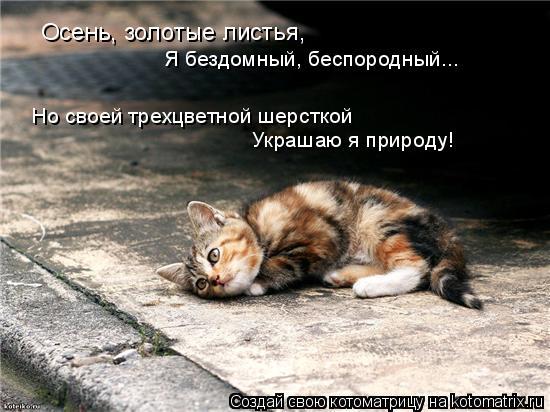Котоматрица: Осень, золотые листья, Я бездомный, беспородный... Но своей трехцветной шерсткой Украшаю я природу!