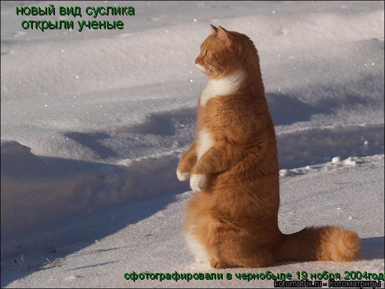 Котоматрица: новый вид суслика  открыли ученые сфотографировали в чернобыле 19 нобря 2004году