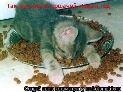 Котоматрица: Так кончается кошачий Новый год