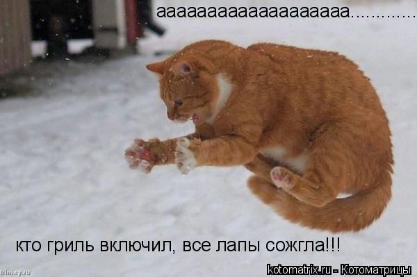 Котоматрица: ааааааааааааааааааа.............. кто гриль включил, все лапы сожгла!!!