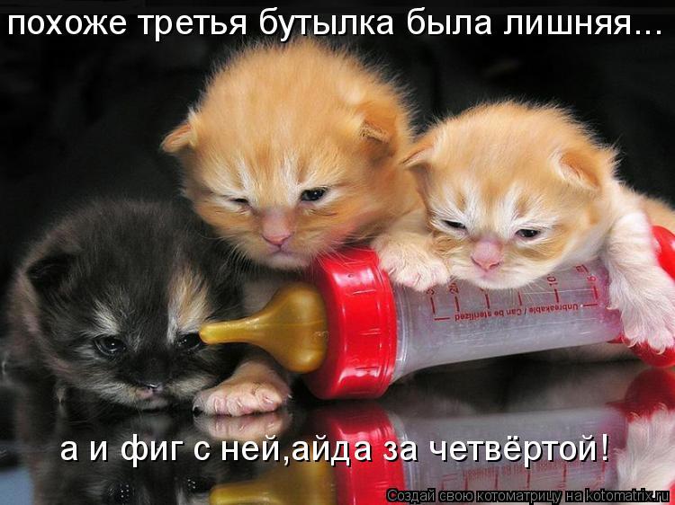 Котоматрица: похоже третья бутылка была лишняя... а и фиг с ней,айда за четвёртой!