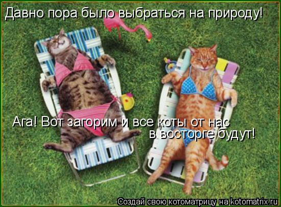 Котоматрица: Давно пора было выбраться на природу! Ага! Вот загорим и все коты от нас в восторге будут!