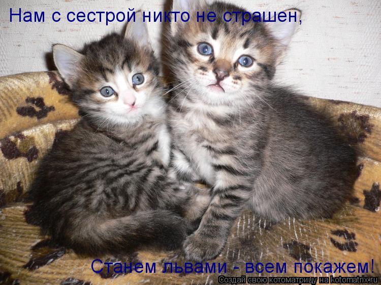 Котоматрица: Нам с сестрой никто не страшен, Станем львами - всем покажем!