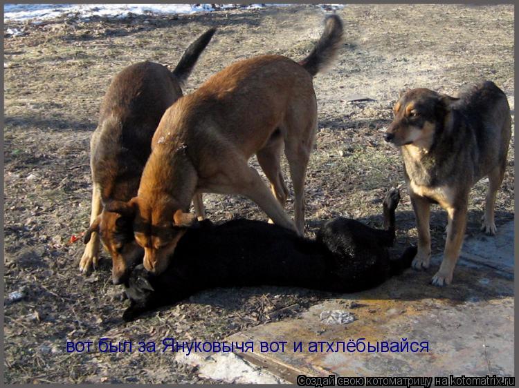 Котоматрица: вот был за Януковычя вот и атхлёбывайся