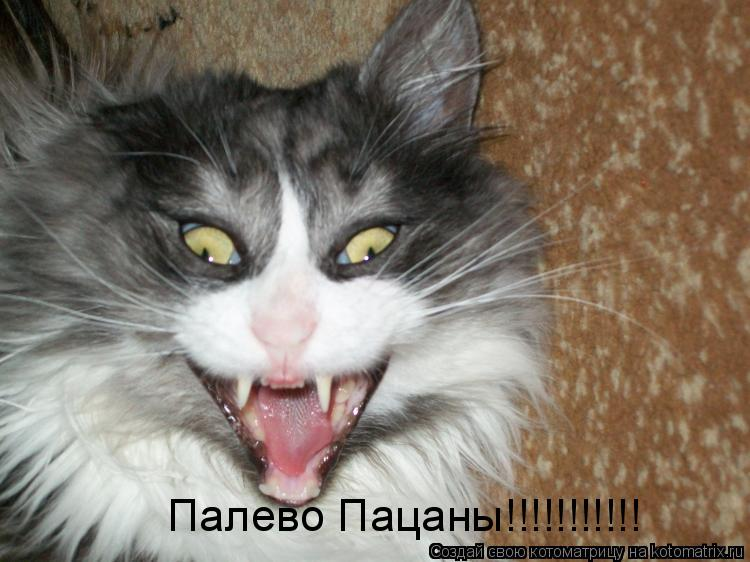 Котоматрица: Палево Пацаны!!!!!!!!!!!
