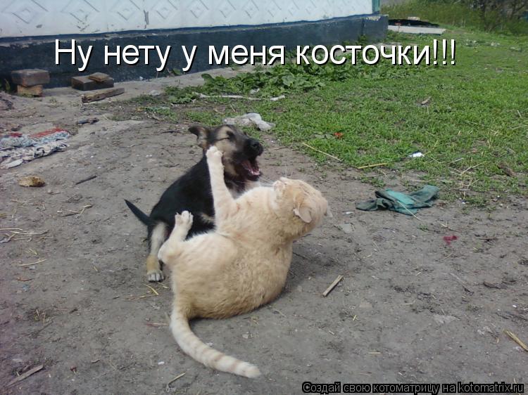 Котоматрица: Ну нету у меня косточки!!!