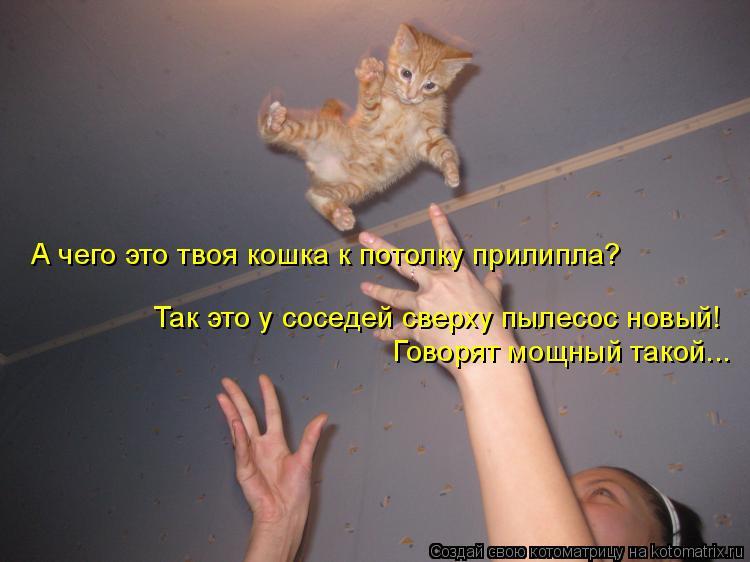 Котоматрица: А чего это твоя кошка к потолку прилипла? Так это у соседей сверху пылесос новый! Говорят мощный такой...