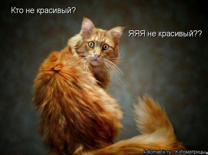 Котоматрица: Кто не красивый?  ЯЯЯ не красивый??