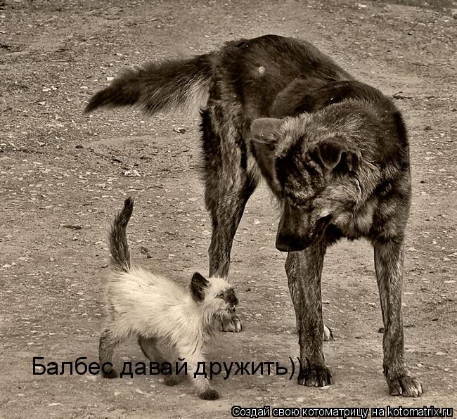 Котоматрица: Балбес давай дружить)))