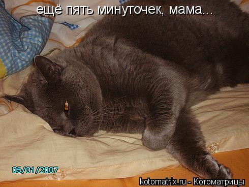 Котоматрица: ещё пять минуточек, мама...