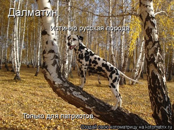 Котоматрица: Далматин. Истинно русская порода. Только для патриотов.