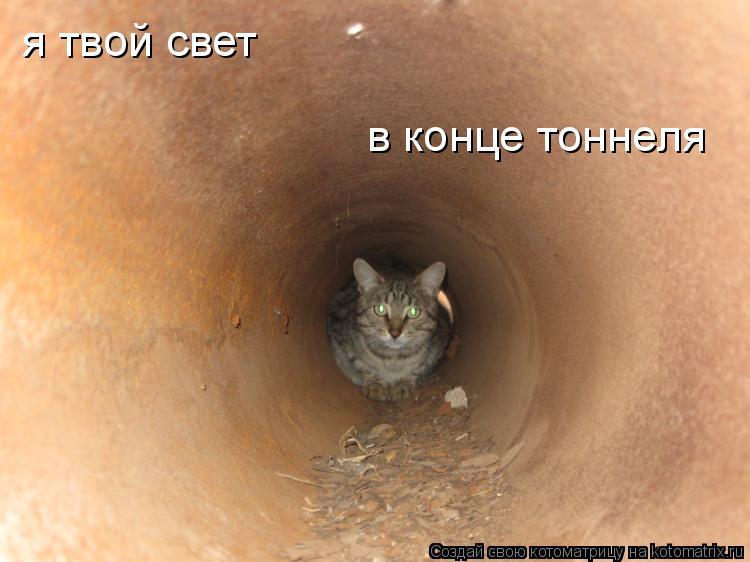 Котоматрица: я твой свет в конце тоннеля