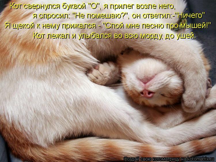 """Котоматрица: Кот свернулся буквой """"О"""", я прилег возле него, я спросил: """"Не помешаю?"""", он ответил:-""""Ничего"""" Я щекой к нему прижался - """"Спой мне песню про мышей!"""""""