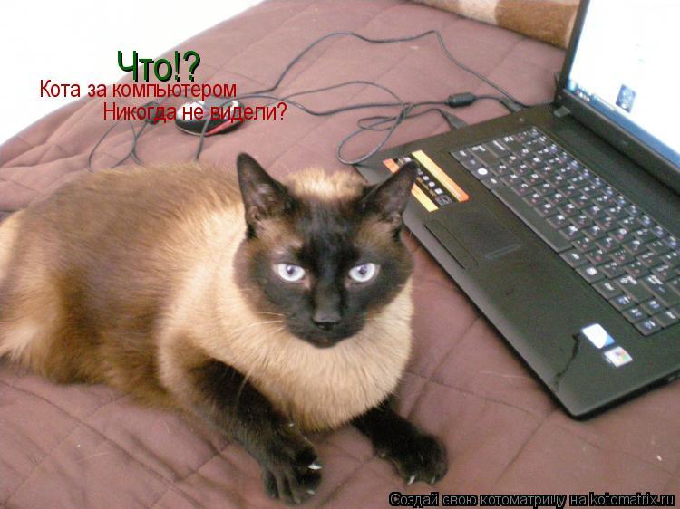 Котоматрица: Что! Что!? Кота за компьютером Никогда не видели?