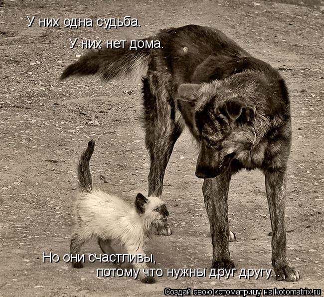 Котоматрица: У них одна судьба. У них нет дома. Но они счастливы, потому что нужны друг другу...