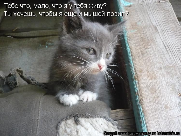 Котоматрица: Тебе что, мало, что я у тебя живу? Ты хочешь, чтобы я ещё и мышей ловил?