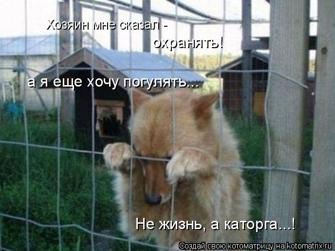 Котоматрица: Хозяин мне сказал - охранять! а я еще хочу погулять... Не жизнь, а каторга...!