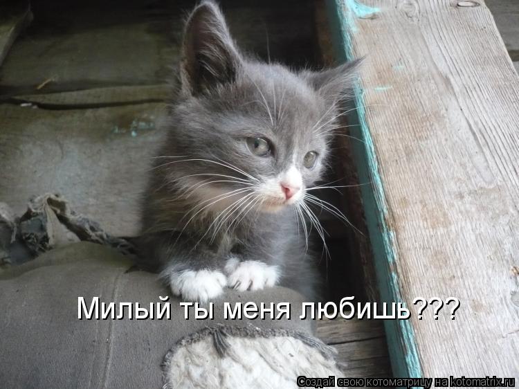 Котоматрица: Милый ты меня любишь???